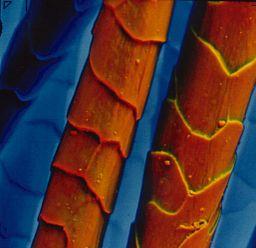 256px-ESEM_color_wool 200 micron range